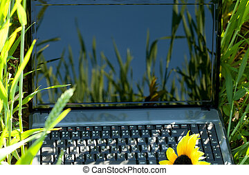 laptop in green grass with a sunflower