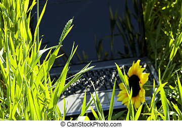 laptop with a sunflower in the green field
