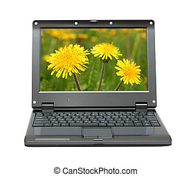 laptop with dandelions on meadow