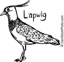 plover stock illustrations 73 plover clip art images and