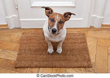 lar, bem-vindo, cão
