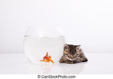 lar, gato, e, um, peixe ouro