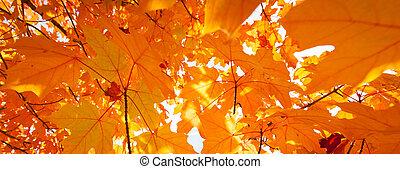 laranja, abstratos