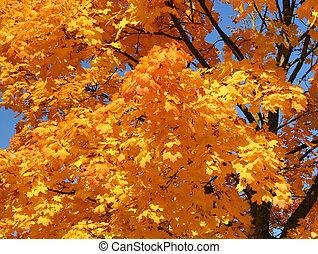 laranja, copa árvore
