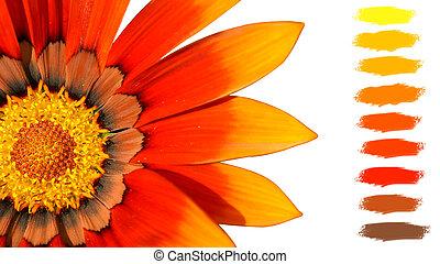 laranja, cor, paleta, Tesouro, flor