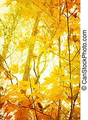 laranja, e, amarela, leafes, de, árvores, em, outono, para, fundo