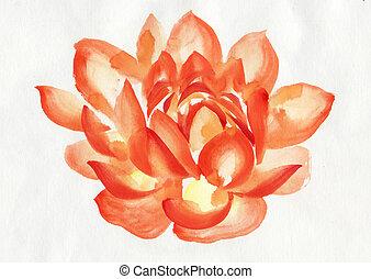 laranja, flor lotus, pintura aquarela