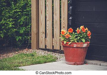 laranja floresce, flowerpot, jardim