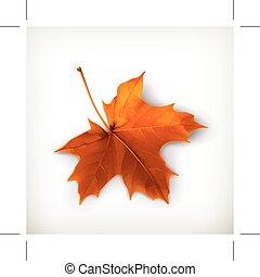laranja, folha, maple