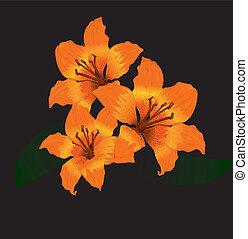 laranja, lírio tigre, ligado, experiência preta