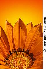 laranja, luminoso, flor, fundo