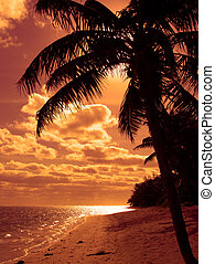 laranja, luminoso, palma