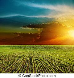 laranja, pôr do sol, sobre, campo verde