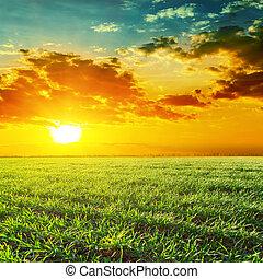 laranja, pôr do sol, sobre, grama verde, campo