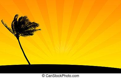 laranja, palma