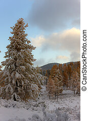Larch in mountains