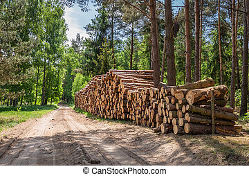 Large amount of cut wood after the storm