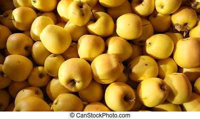 large amount yellow apples