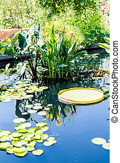 Large and Small Lilly Pads