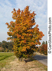 Large autumnal tree against the sky