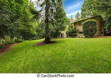 Large backyard area with tree