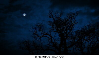 Large Bare Tree Under Full Moon - Large old tree with no...