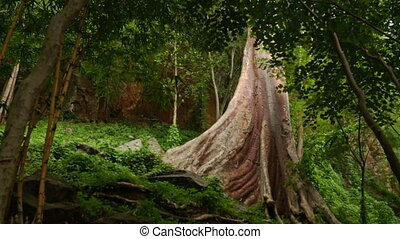 Large Bare Trunk of Tropical Tree among Wild Forest