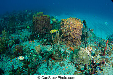 Large Barrel Sponges on a coral reef.
