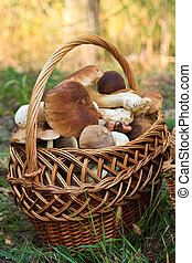 large basket with porcini mushrooms in the forest