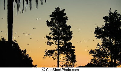 Large Bats Hang From Branches - Steady, low angle, medium ...