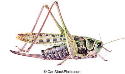 large beetle isolated on white background