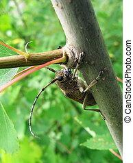 Large beetle on tree