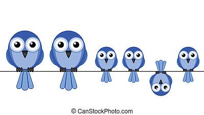 bird family - Large bird family isolated on white background...