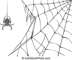 Large black spider and web on white background. Isolated...
