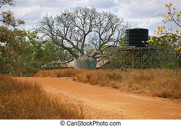 Large Boab Tree