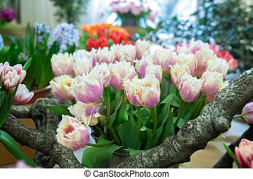 large bouquet of delicate pink yellow tulips with fringe . Greeting card, hello spring concept