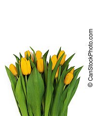 Large bouquet of fresh yellow tulips, isolated on white background