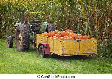Large box of orange pumpkins.