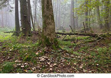Large broken tree lying in misty forest