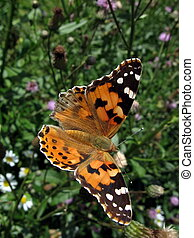 Large butterfly