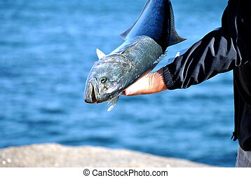 Large Catch