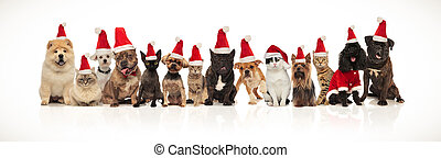 large christmas team of many cute cats and dogs