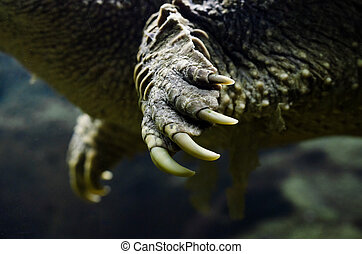 large claws on the paw of a sea turtle close up