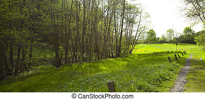 large clearing in the forest of green grass