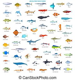 Large Collection of Fishes of the World
