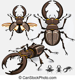 Large Dark Stag Beetle Insect Bug