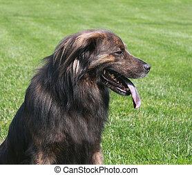 Large Dog face profile