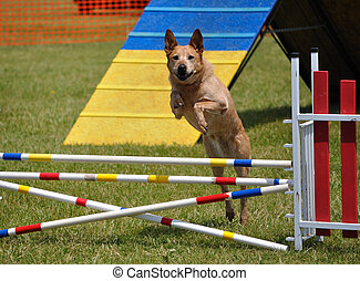 Large dog leaping over a double jump at agility trial, copy space