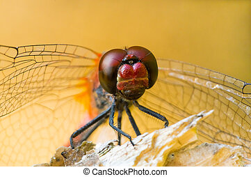 Large dragonfly sits on a broken branch