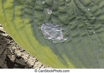 Large drop of dew